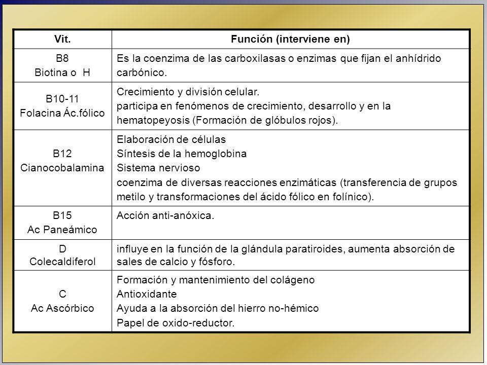 Vit.Función (interviene en) B8 Biotina o H Es la coenzima de las carboxilasas o enzimas que fijan el anhídrido carbónico. B10-11 Folacina Ác.fólico Cr