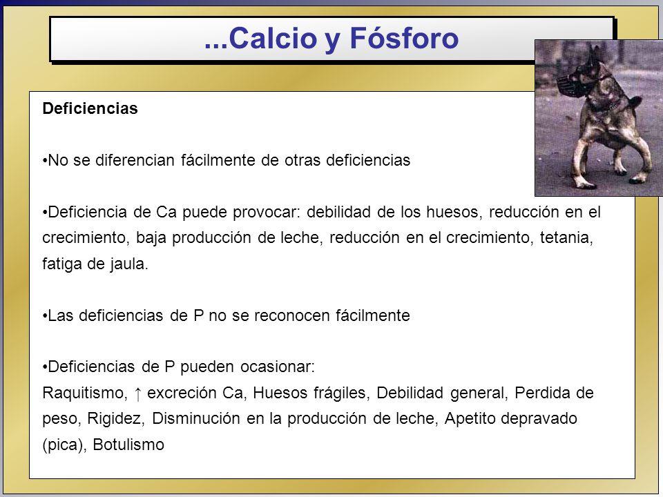 ...Calcio y Fósforo Deficiencias No se diferencian fácilmente de otras deficiencias Deficiencia de Ca puede provocar: debilidad de los huesos, reducci
