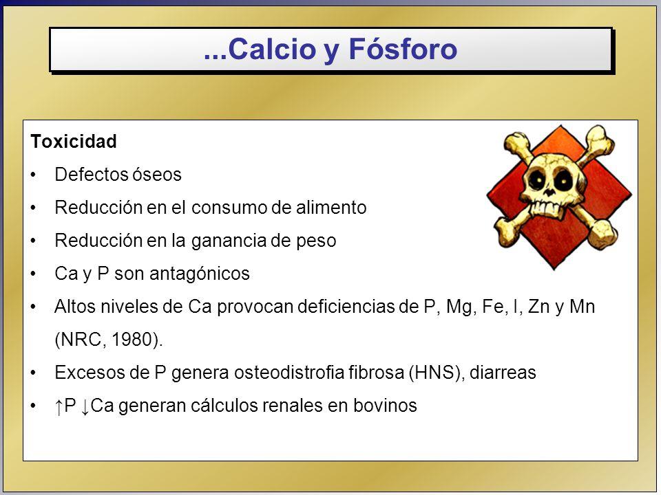 ...Calcio y Fósforo Toxicidad Defectos óseos Reducción en el consumo de alimento Reducción en la ganancia de peso Ca y P son antagónicos Altos niveles