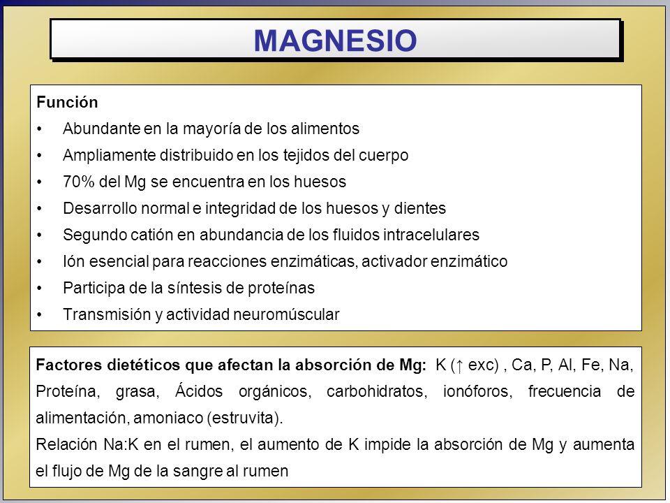 MAGNESIO Función Abundante en la mayoría de los alimentos Ampliamente distribuido en los tejidos del cuerpo 70% del Mg se encuentra en los huesos Desa