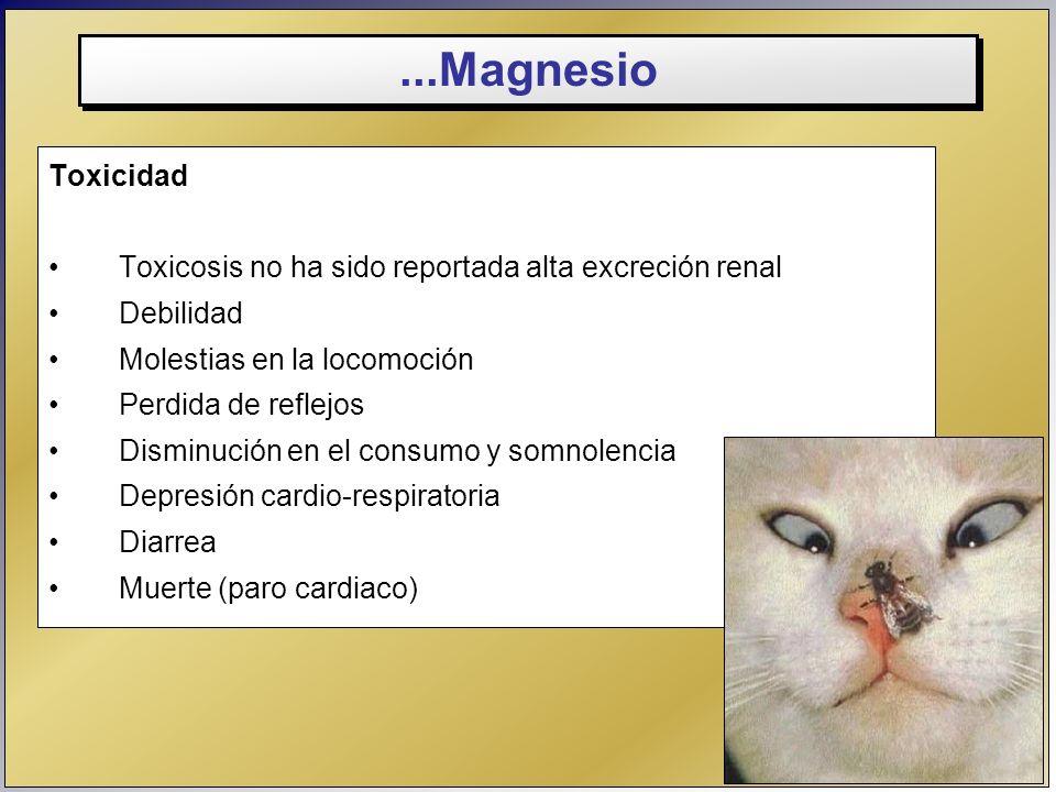 ...Magnesio Toxicidad Toxicosis no ha sido reportada alta excreción renal Debilidad Molestias en la locomoción Perdida de reflejos Disminución en el c