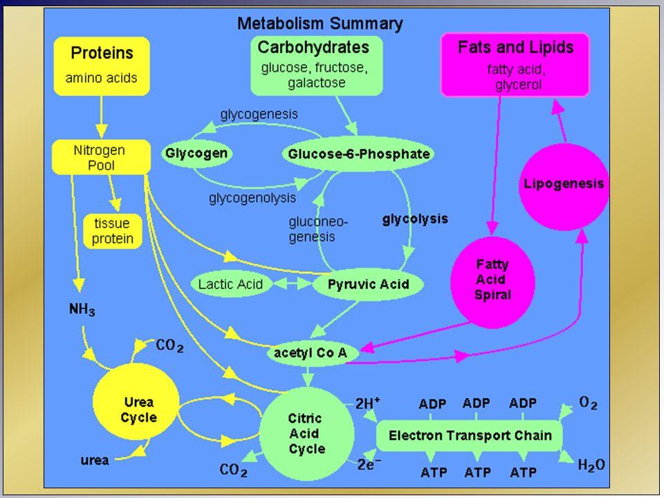 Minerales Características: Residuos de incineración No aporte energético Peso específico Eliminación Interacciones (sinérgicas – antagónicas)