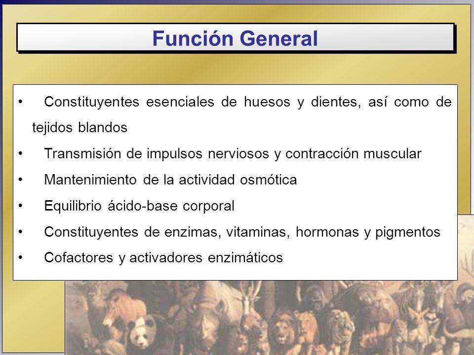 Función General Constituyentes esenciales de huesos y dientes, así como de tejidos blandos Transmisión de impulsos nerviosos y contracción muscular Ma