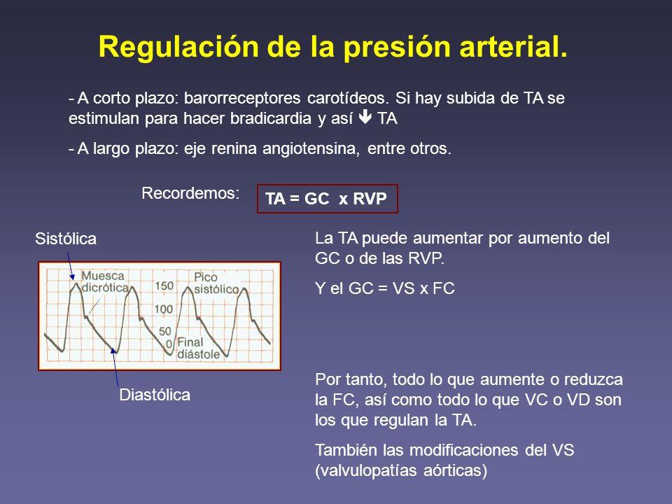 Regulación de la presión arterial. - A corto plazo: barorreceptores carotídeos. Si hay subida de TA se estimulan para hacer bradicardia y así TA - A l