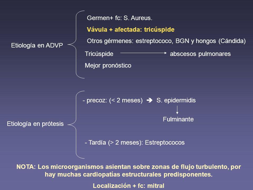 Etiología en ADVP Germen+ fc: S. Aureus. Vávula + afectada: tricúspide Otros gérmenes: estreptococo, BGN y hongos (Cándida) Tricúspide abscesos pulmon