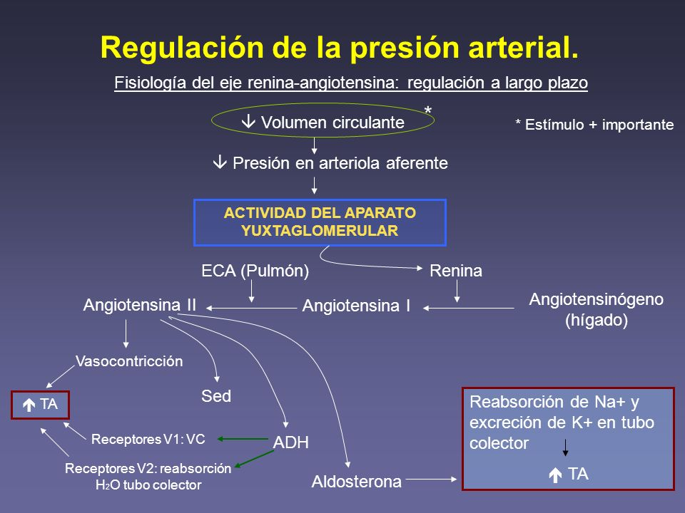 Regulación de la presión arterial. Fisiología del eje renina-angiotensina: regulación a largo plazo Volumen circulante Presión en arteriola aferente A