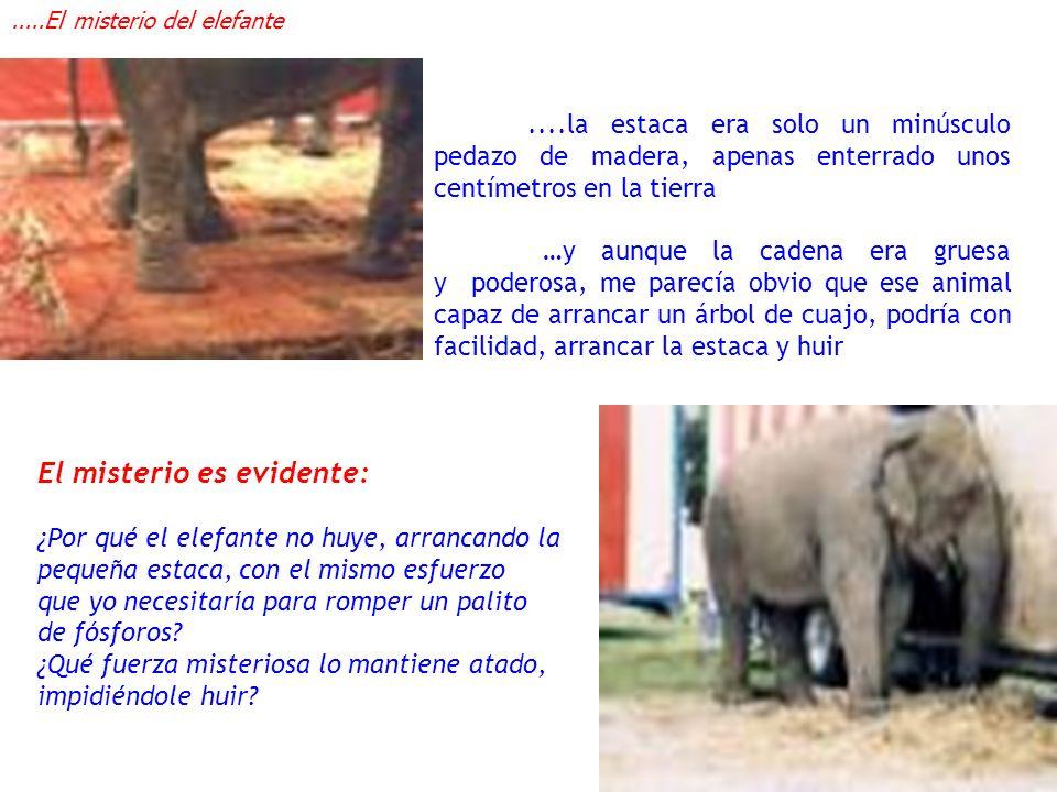 ....el elefante del circo no escapa porque ha estado atado a una estaca toda su vida desde que era muy pequeño …cerré los ojos y me imaginé al pequeño elefantito, con solo unos días de nacido, sujeto a la estaca.