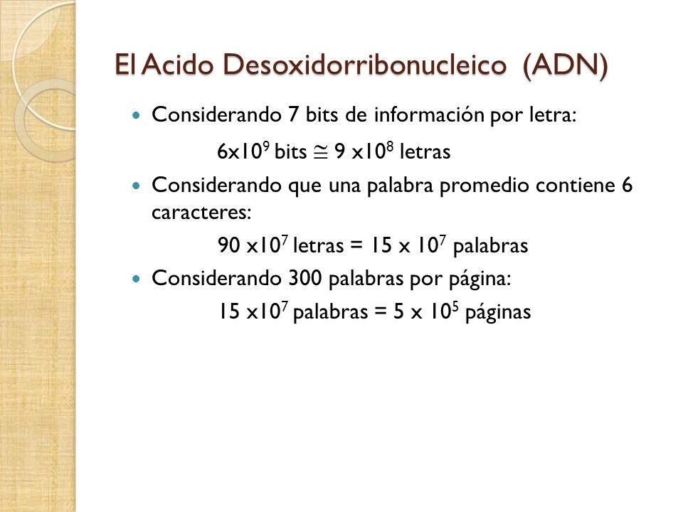 El Acido Desoxidorribonucleico (ADN) Considerando 7 bits de información por letra: 6x10 9 bits 9 x10 8 letras Considerando que una palabra promedio contiene 6 caracteres: 90 x10 7 letras = 15 x 10 7 palabras Considerando 300 palabras por página: 15 x10 7 palabras = 5 x 10 5 páginas