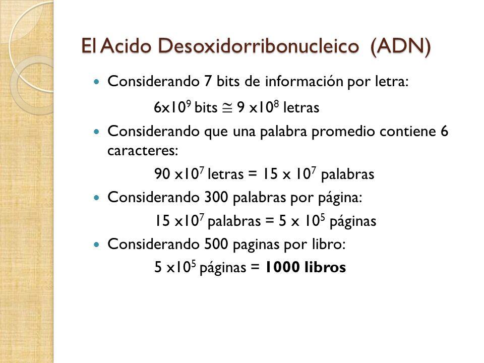 El Acido Desoxidorribonucleico (ADN) Considerando 7 bits de información por letra: 6x10 9 bits 9 x10 8 letras Considerando que una palabra promedio contiene 6 caracteres: 90 x10 7 letras = 15 x 10 7 palabras Considerando 300 palabras por página: 15 x10 7 palabras = 5 x 10 5 páginas Considerando 500 paginas por libro: 5 x10 5 páginas = 1000 libros