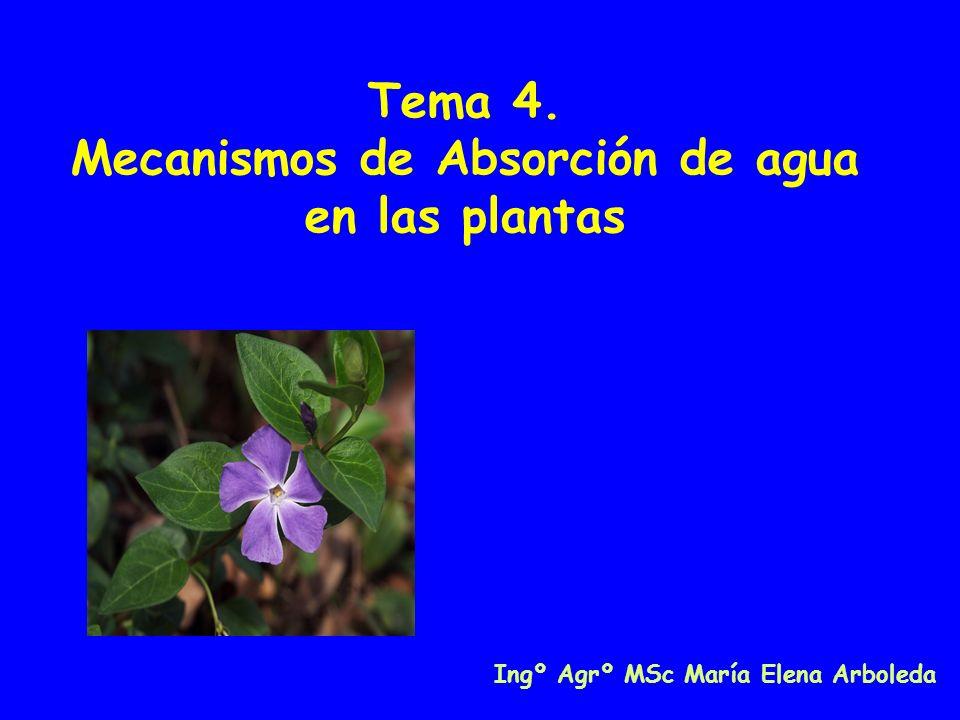 Tema 4. Mecanismos de Absorción de agua en las plantas Ingº Agrº MSc María Elena Arboleda
