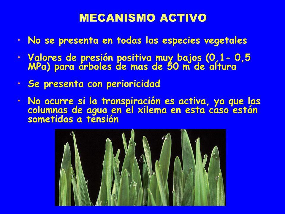 MECANISMO ACTIVO No se presenta en todas las especies vegetales Valores de presión positiva muy bajos (0,1- 0,5 MPa) para árboles de mas de 50 m de al