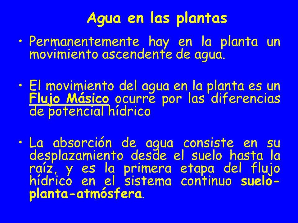 Permanentemente hay en la planta un movimiento ascendente de agua. El movimiento del agua en la planta es un Flujo Másico ocurre por las diferencias d