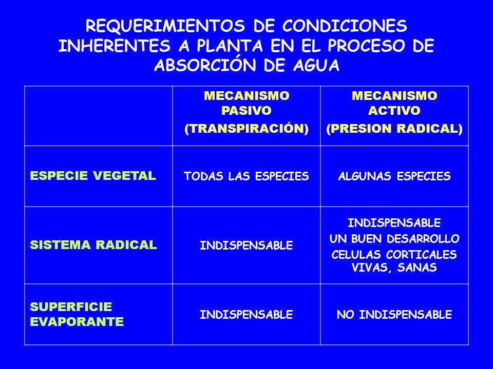 REQUERIMIENTOS DE CONDICIONES INHERENTES A PLANTA EN EL PROCESO DE ABSORCIÓN DE AGUA MECANISMO PASIVO (TRANSPIRACIÓN) MECANISMO ACTIVO (PRESION RADICA