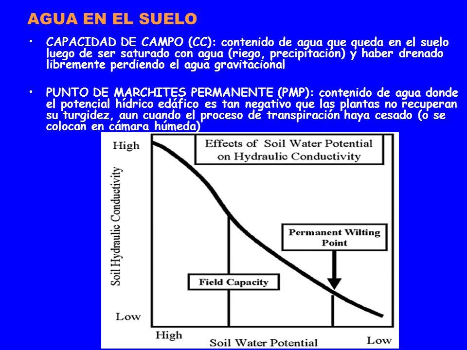 AGUA EN EL SUELO CAPACIDAD DE CAMPO (CC): contenido de agua que queda en el suelo luego de ser saturado con agua (riego, precipitación) y haber drenad
