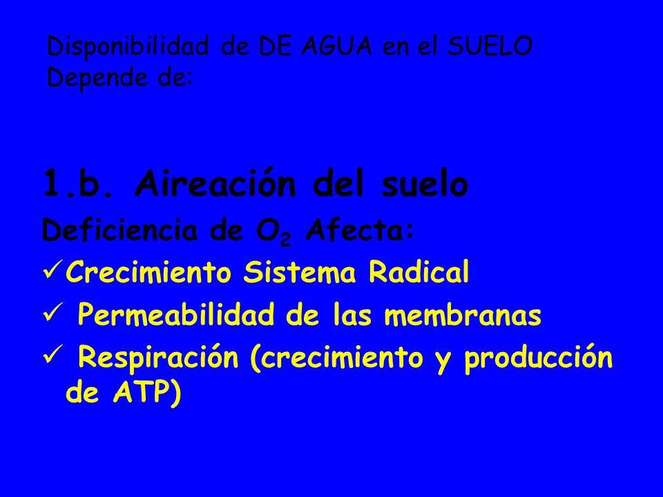 1.b. Aireación del suelo Deficiencia de O 2 Afecta: Crecimiento Sistema Radical Permeabilidad de las membranas Respiración (crecimiento y producción d