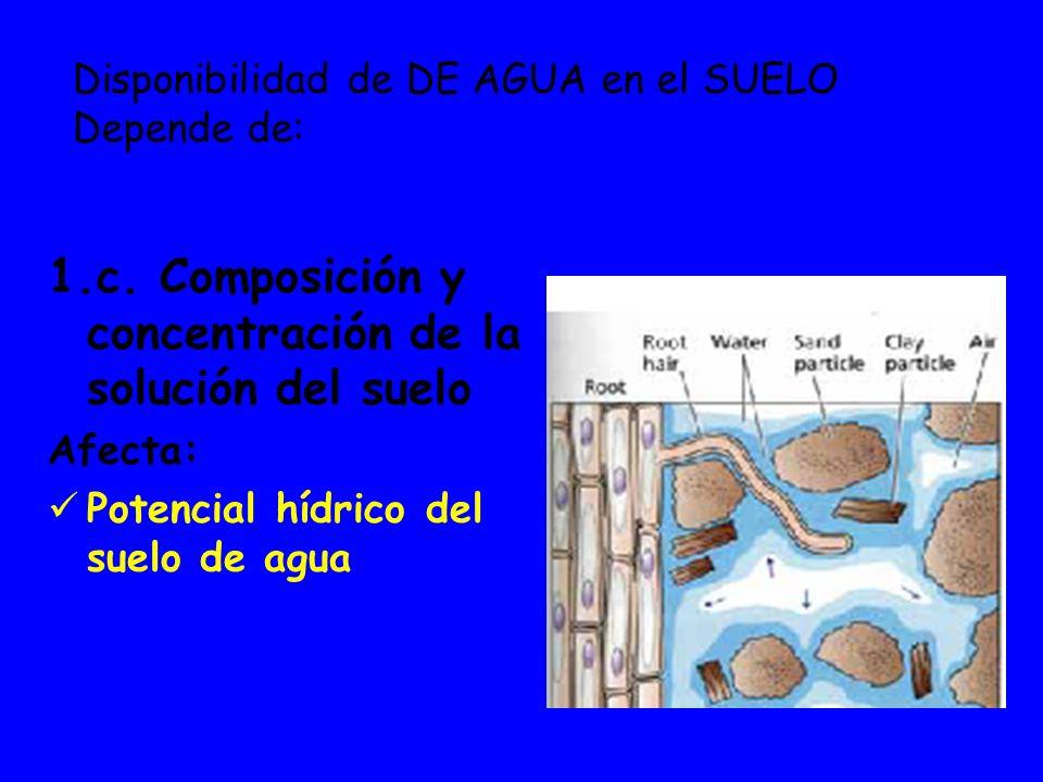 1.c. Composición y concentración de la solución del suelo Afecta: Potencial hídrico del suelo de agua Disponibilidad de DE AGUA en el SUELO Depende de