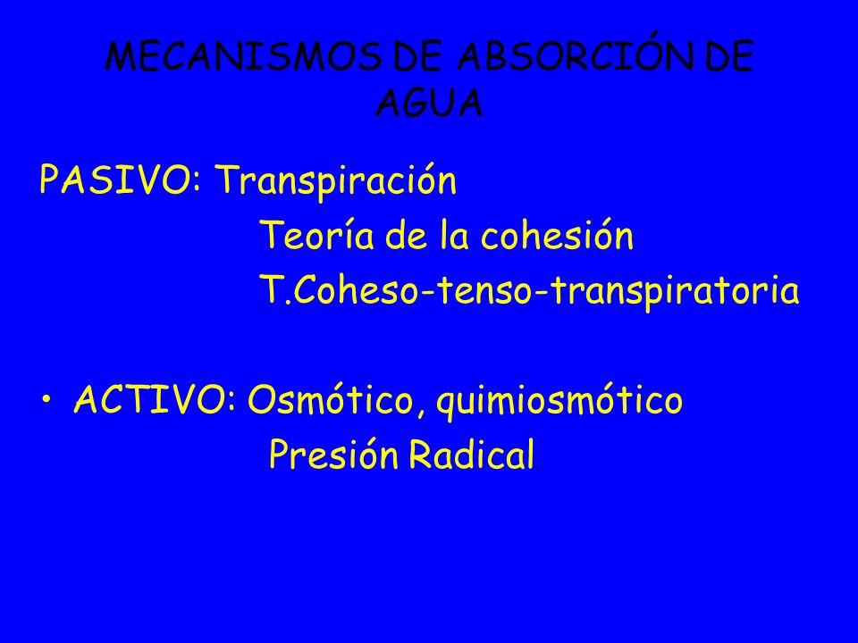 MECANISMOS DE ABSORCIÓN DE AGUA PASIVO: Transpiración Teoría de la cohesión T.Coheso-tenso-transpiratoria ACTIVO: Osmótico, quimiosmótico Presión Radi