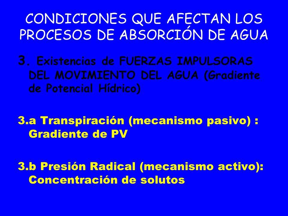 CONDICIONES QUE AFECTAN LOS PROCESOS DE ABSORCIÓN DE AGUA 3. Existencias de FUERZAS IMPULSORAS DEL MOVIMIENTO DEL AGUA (Gradiente de Potencial Hídrico