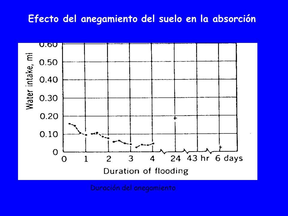 Efecto del anegamiento del suelo en la absorción Duración del anegamiento