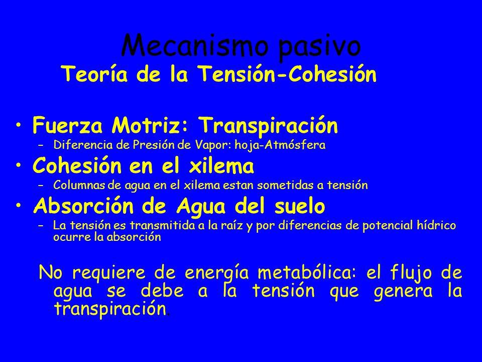 Mecanismo pasivo Teoría de la Tensión-Cohesión Fuerza Motriz: Transpiración –Diferencia de Presión de Vapor: hoja-Atmósfera Cohesión en el xilema –Col