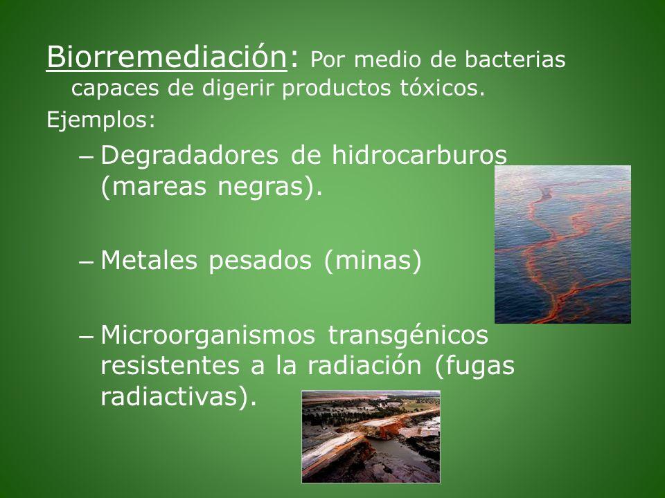 Biorremediación: Por medio de bacterias capaces de digerir productos tóxicos. Ejemplos: – Degradadores de hidrocarburos (mareas negras). – Metales pes