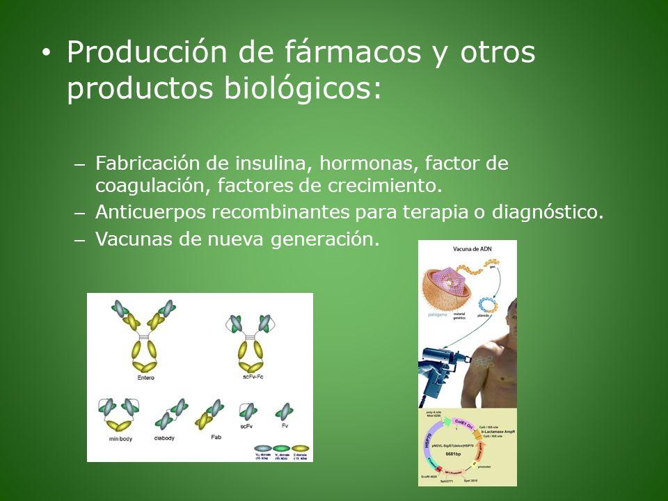 Producción de fármacos y otros productos biológicos: – Fabricación de insulina, hormonas, factor de coagulación, factores de crecimiento. – Anticuerpo
