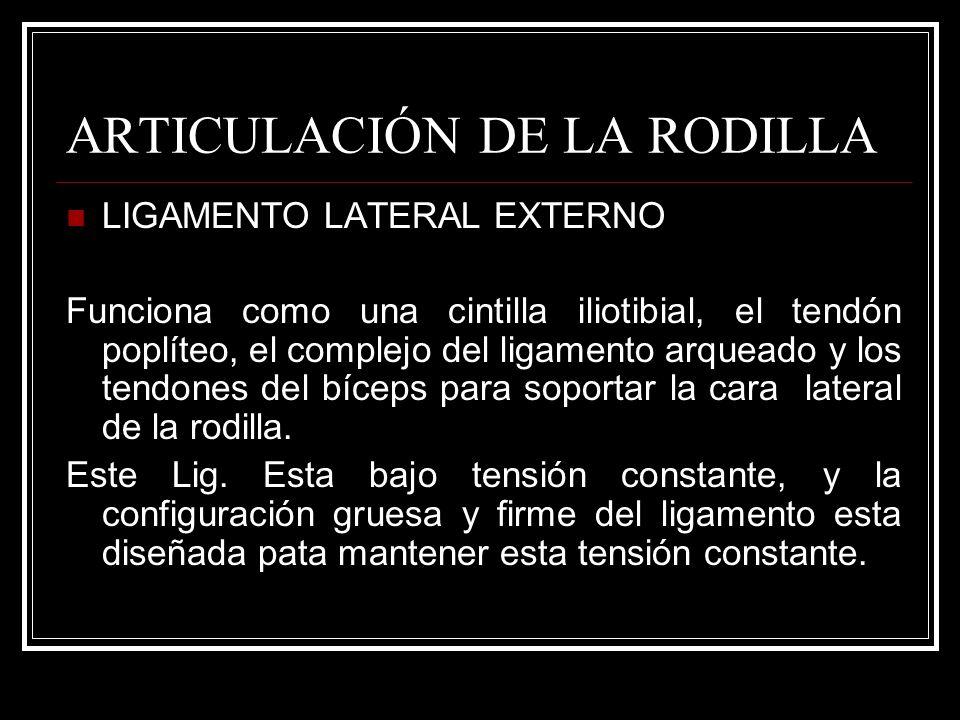 ARTICULACIÓN DE LA RODILLA LIGAMENTO LATERAL EXTERNO Funciona como una cintilla iliotibial, el tendón poplíteo, el complejo del ligamento arqueado y l
