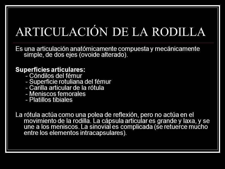 ARTICULACIÓN DE LA RODILLA Es una articulación anatómicamente compuesta y mecánicamente simple, de dos ejes (ovoide alterado). Superficies articulares
