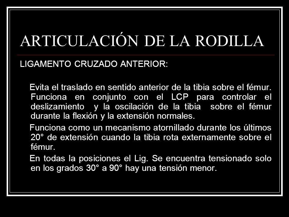 ARTICULACIÓN DE LA RODILLA LIGAMENTO CRUZADO ANTERIOR: Evita el traslado en sentido anterior de la tibia sobre el fémur. Funciona en conjunto con el L