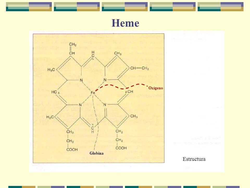 Heme Oxígeno Globina Estructura
