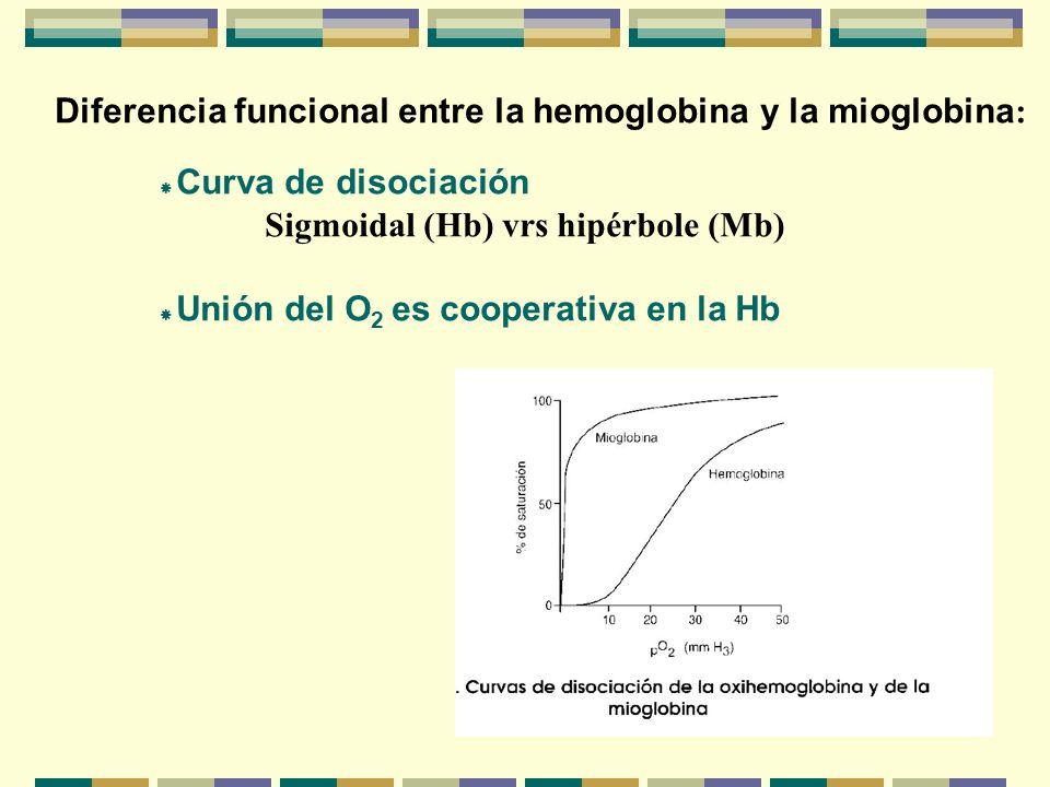 Diferencia funcional entre la hemoglobina y la mioglobina : Curva de disociación Sigmoidal (Hb) vrs hipérbole (Mb) Unión del O 2 es cooperativa en la