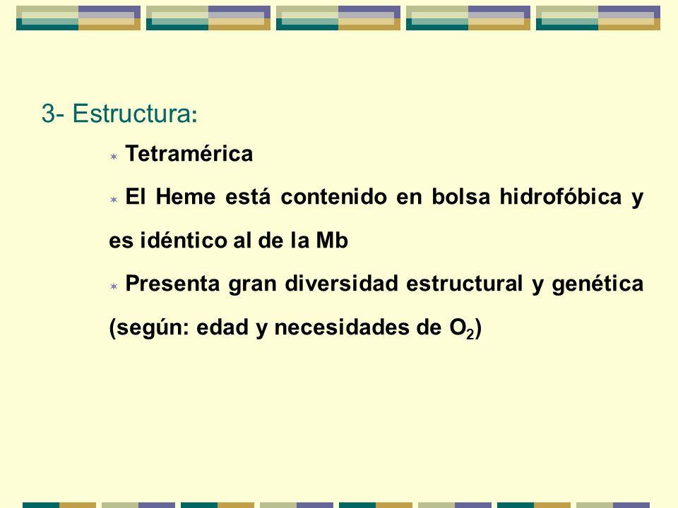 3- Estructura : Tetramérica El Heme está contenido en bolsa hidrofóbica y es idéntico al de la Mb Presenta gran diversidad estructural y genética (seg