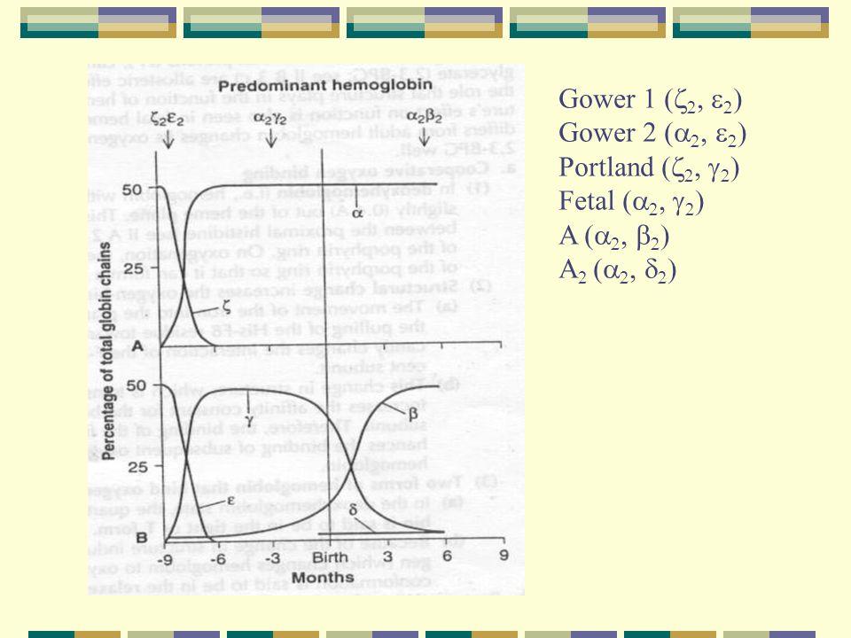 Gower 1 ( Gower 2 ( Portland ( Fetal ( A ( A 2 (