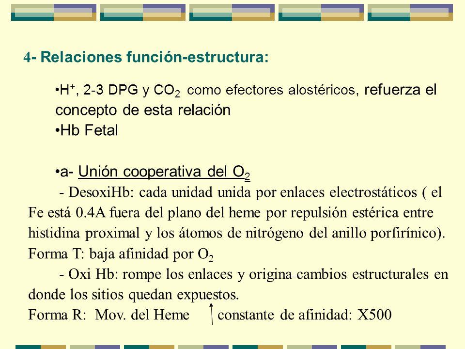 4 - Relaciones función-estructura: H +, 2-3 DPG y CO 2 como efectores alostéricos, refuerza el concepto de esta relación Hb Fetal a- Unión cooperativa
