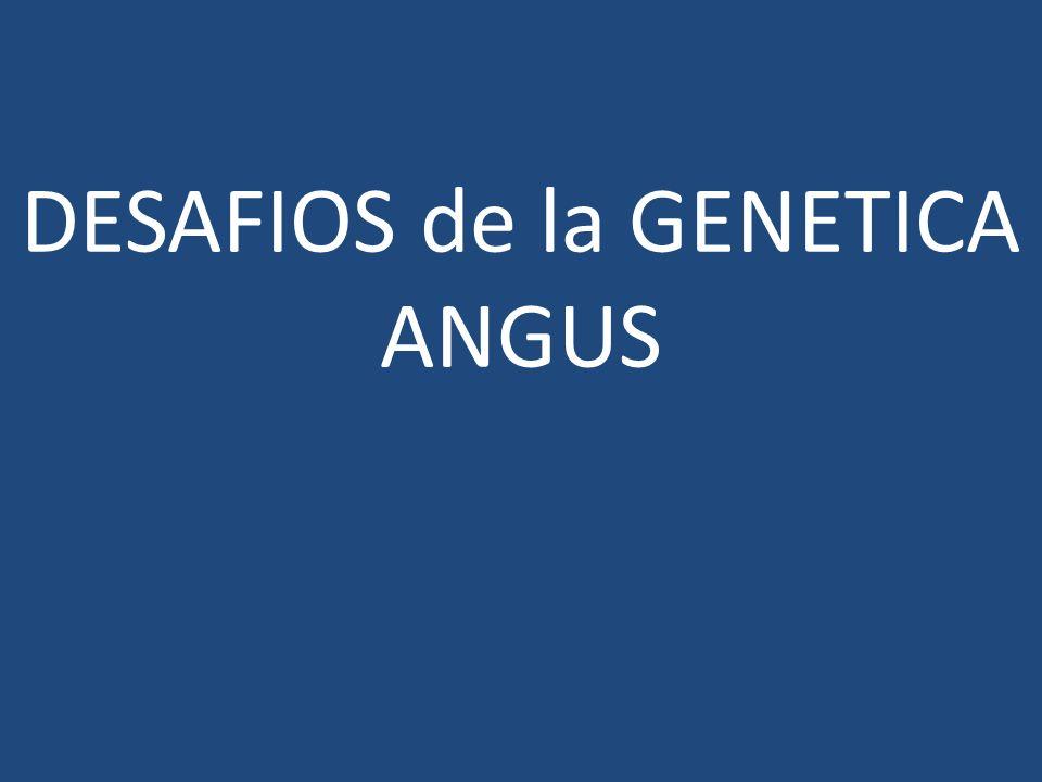 DESAFIOS de la GENETICA ANGUS