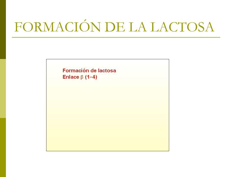 FORMACIÓN DE LA LACTOSA