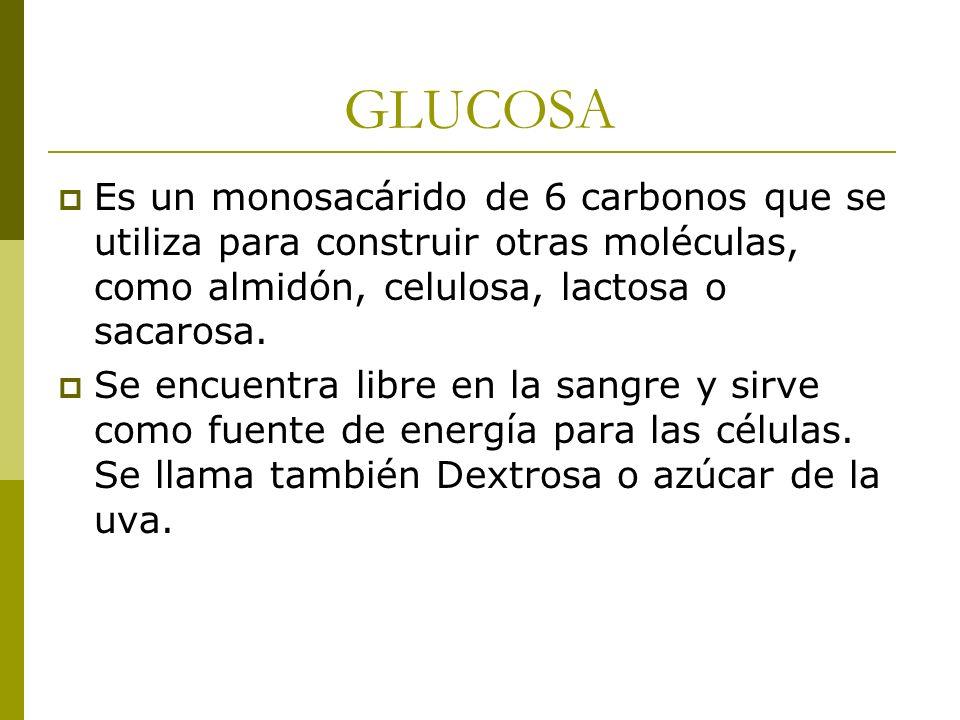 GLUCOSA Es un monosacárido de 6 carbonos que se utiliza para construir otras moléculas, como almidón, celulosa, lactosa o sacarosa. Se encuentra libre