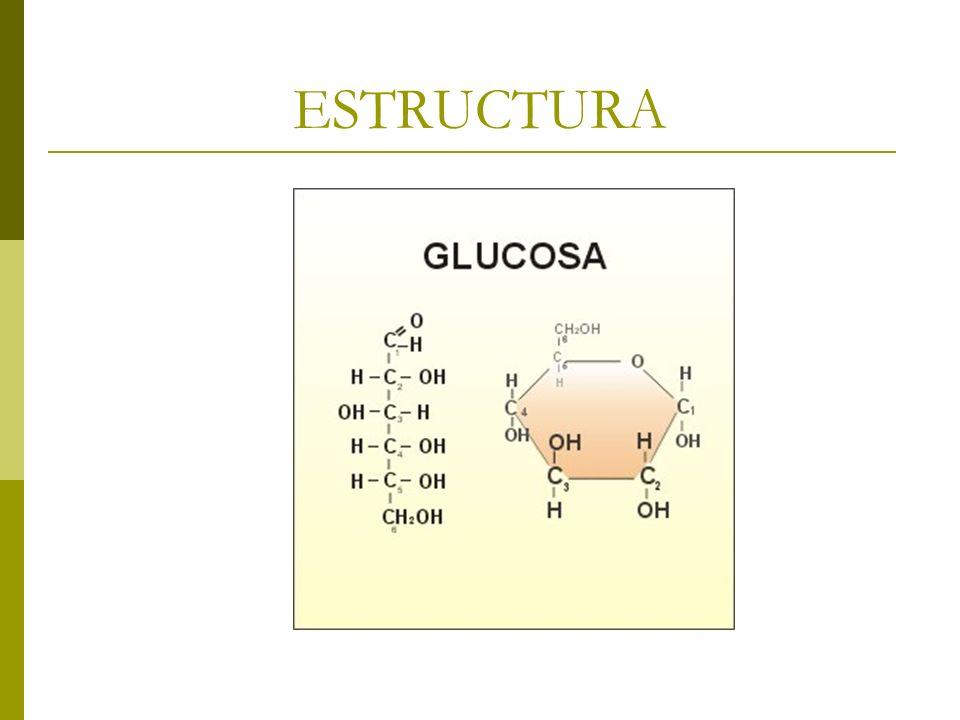 FRUCTUOSA Monosacárido que se encuentra libre en las frutas o unida a la glucosa, formando la sacarosa.