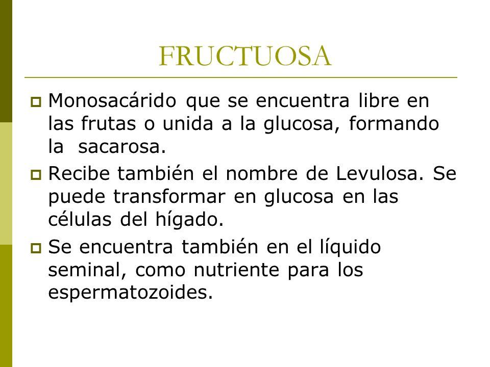 FRUCTUOSA Monosacárido que se encuentra libre en las frutas o unida a la glucosa, formando la sacarosa. Recibe también el nombre de Levulosa. Se puede