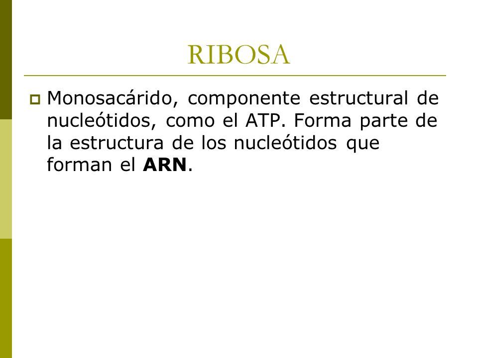 RIBOSA Monosacárido, componente estructural de nucleótidos, como el ATP. Forma parte de la estructura de los nucleótidos que forman el ARN.