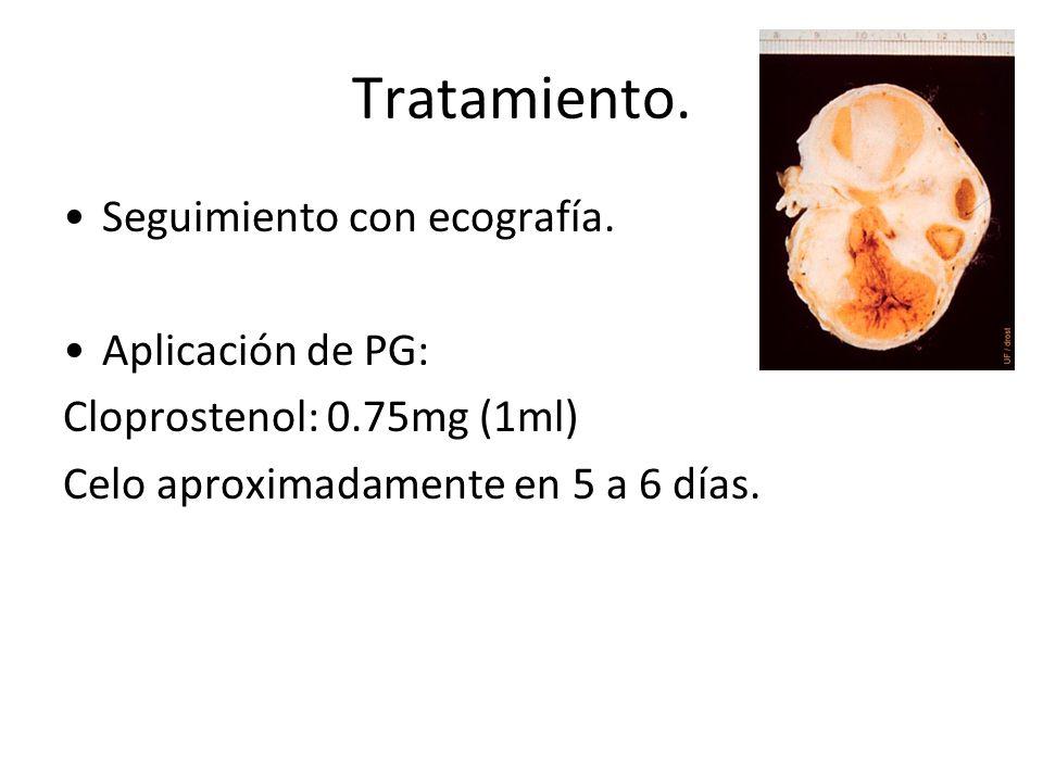 Tratamiento. Seguimiento con ecografía. Aplicación de PG: Cloprostenol: 0.75mg (1ml) Celo aproximadamente en 5 a 6 días.