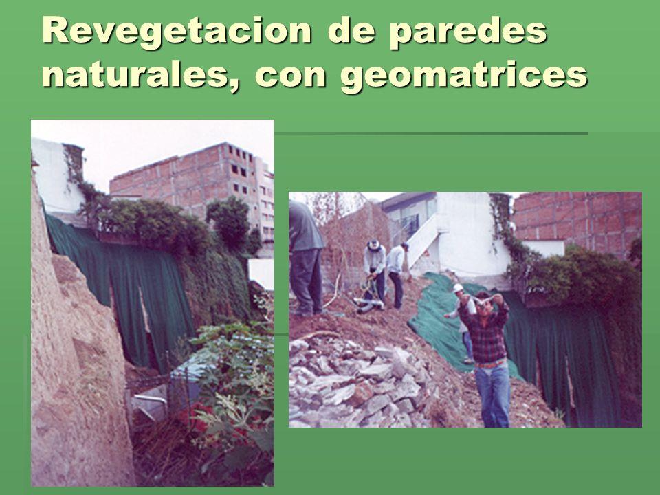 Revegetacion de paredes naturales, con geomatrices