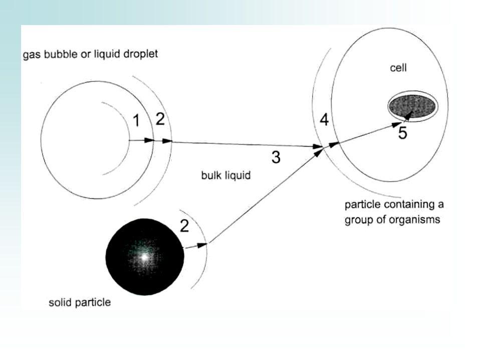 Cadena de etapas de transferencia de masa para un sustrato ó nutriente desde una burbuja de gas, gotas de líquido, ó partículas sólidas hacia el sitio de reacción dentro de la célula.