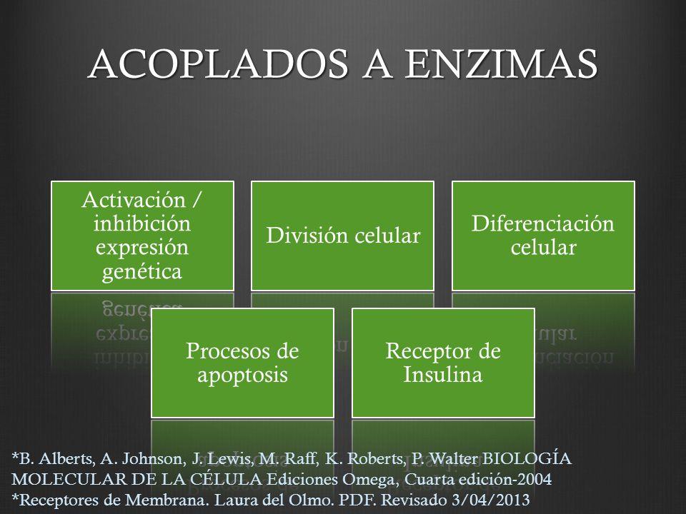 ACOPLADOS A ENZIMAS Activación / inhibición expresión genética División celular Diferenciación celular Procesos de apoptosis Receptor de Insulina *B.