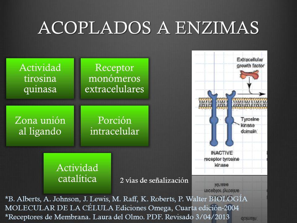 ACOPLADOS A ENZIMAS Actividad tirosina quinasa Receptor monómeros extracelulares Zona unión al ligando Porción intracelular Actividad catalítica 2 vía