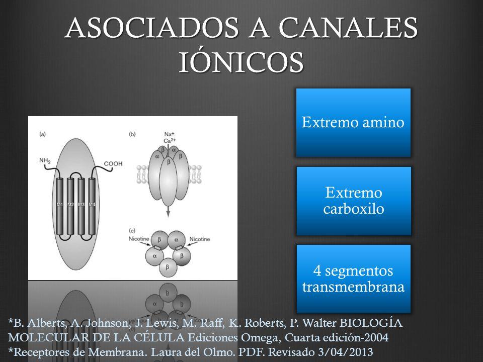 ASOCIADOS A CANALES IÓNICOS Extremo amino Extremo carboxilo 4 segmentos transmembrana *B. Alberts, A. Johnson, J. Lewis, M. Raff, K. Roberts, P. Walte