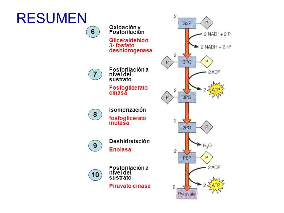 RESUMEN Oxidación y Fosforilación Gliceraldehido 3- fosfato deshidrogenasa Fosforilación a nivel del sustrato Fosfoglicerato cinasa Isomerización fosf