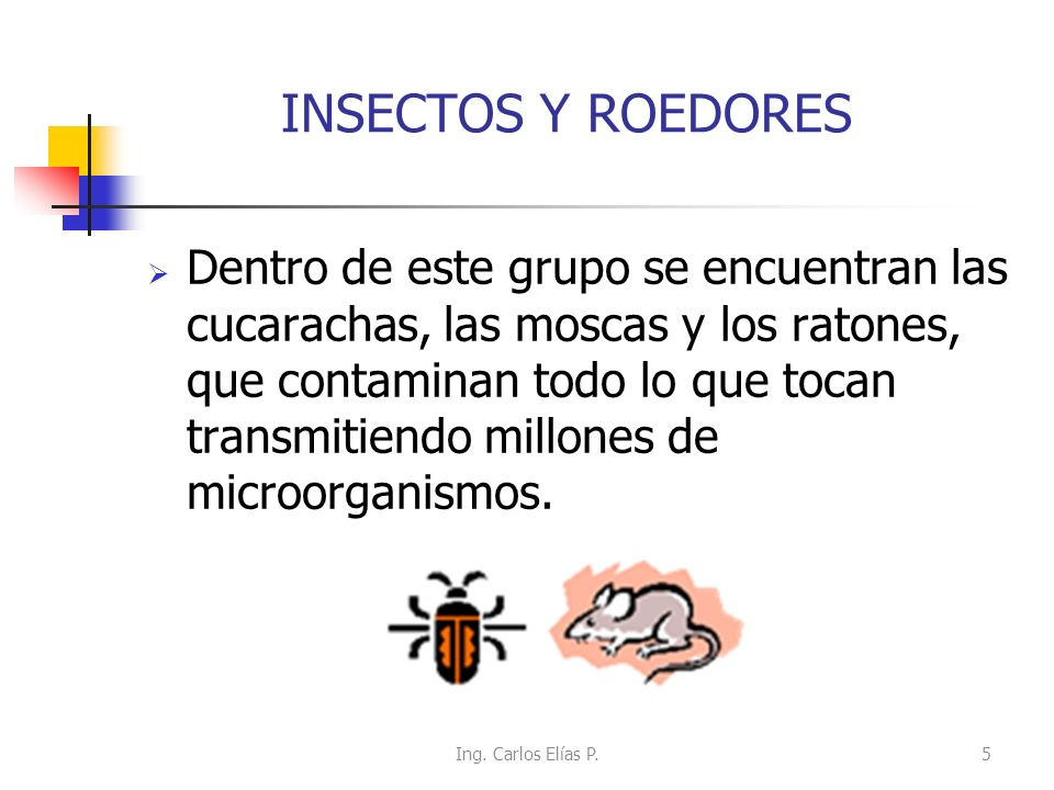 CUCARACHA Porta generalmente microorganismos patógenos tales como: salmonella, hongos, huevos de parásitos y virus.