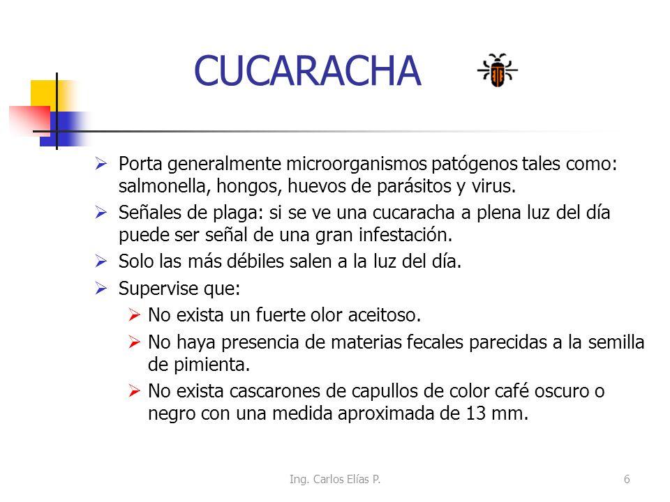 CUCARACHA Porta generalmente microorganismos patógenos tales como: salmonella, hongos, huevos de parásitos y virus. Señales de plaga: si se ve una cuc