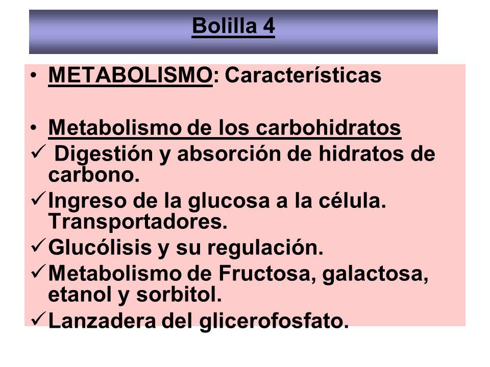 METABOLISMO: Características Metabolismo de los carbohidratos Digestión y absorción de hidratos de carbono. Ingreso de la glucosa a la célula. Transpo